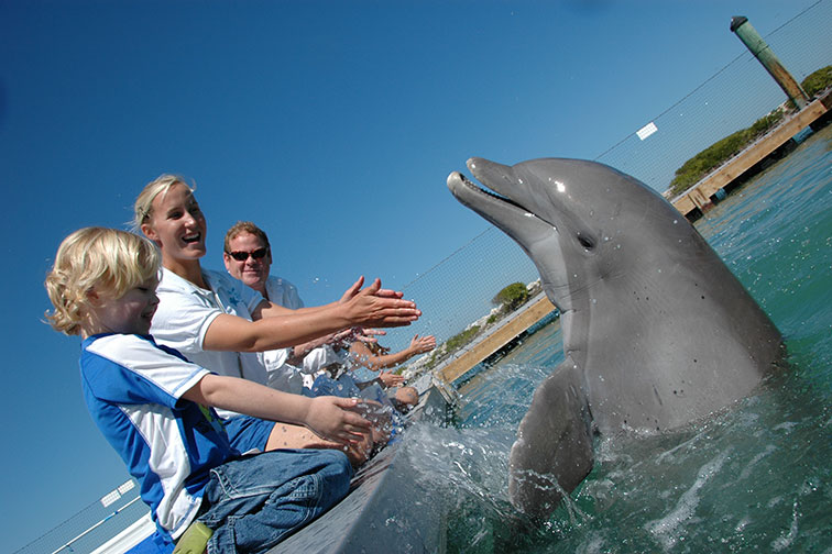 Swim With Dolphins Program at Hawks Cay Resort