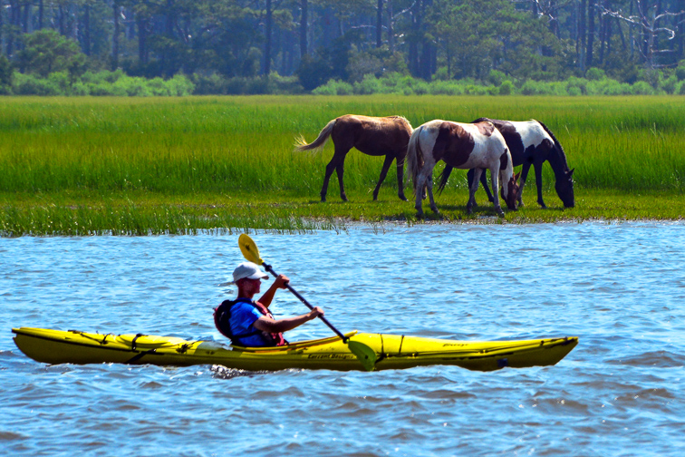 A kayaker passing two Chincoteague ponies on Assateague Island, Virginia; Courtesy of The Old Major