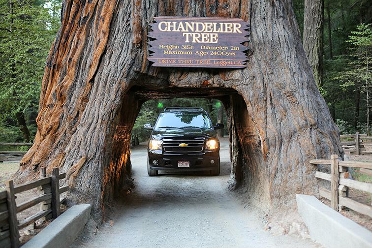 Famous Chandelier Tree in Leggett, California; Courtesy of Traveller70/Shutterstock