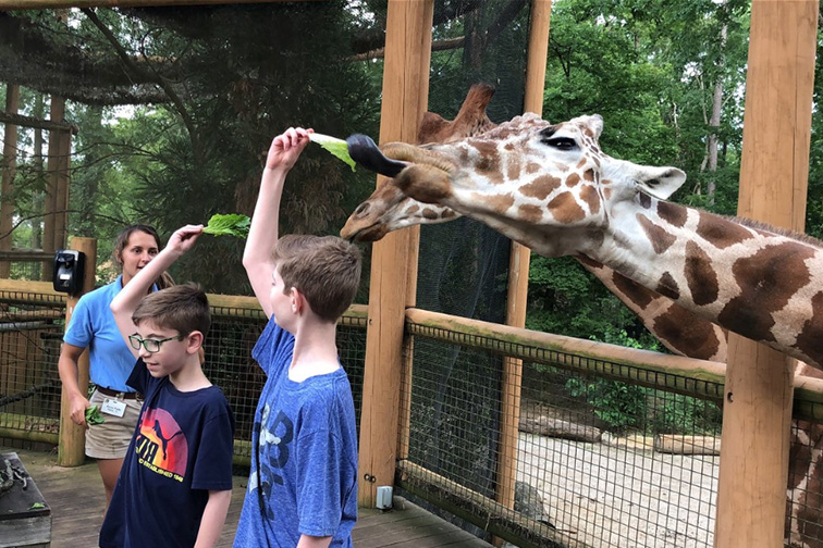 Kids feed a giraffe at the Birmingham Zoo; Courtesy of TripAdvisor Traveler/RB3