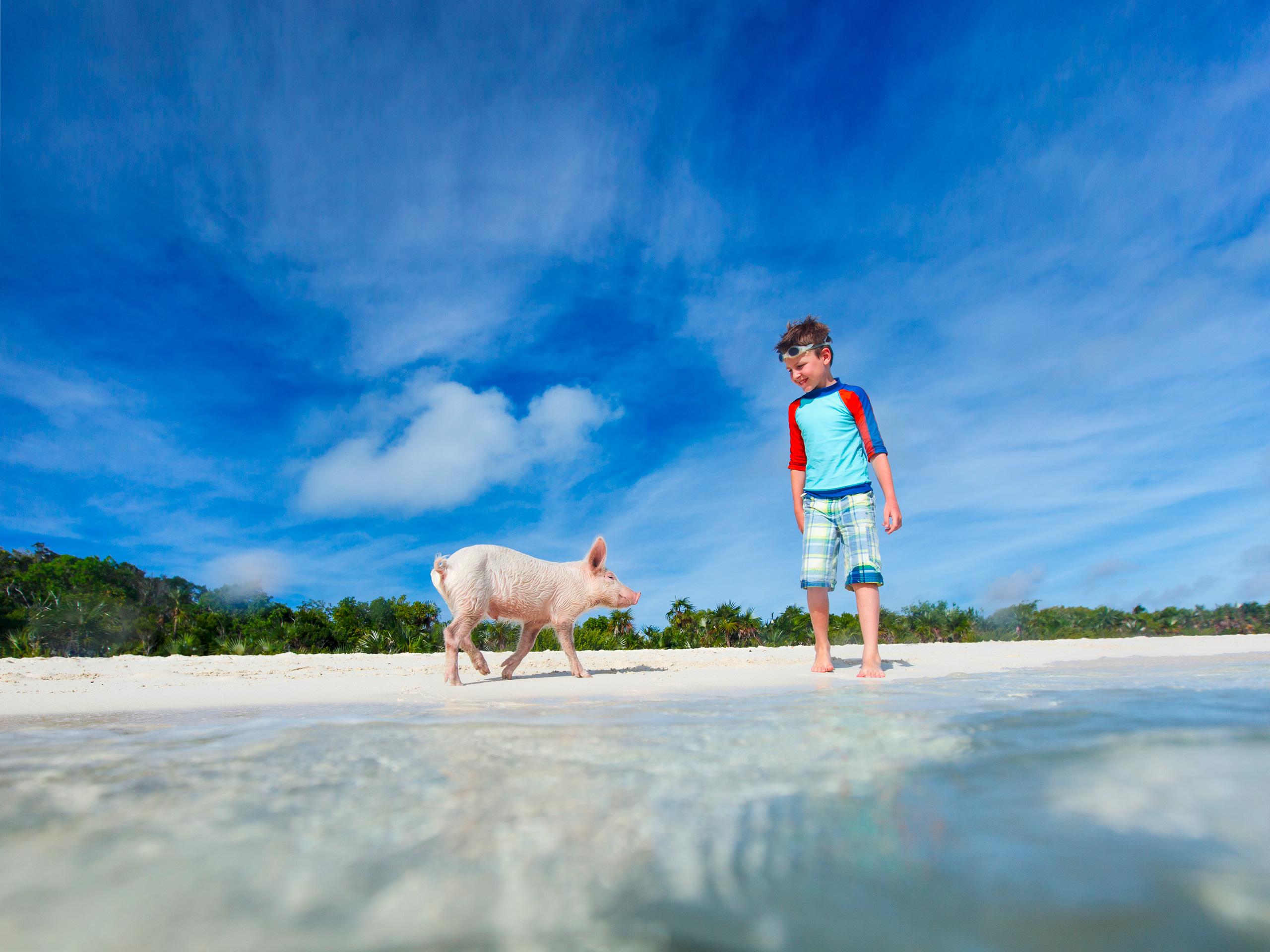 Boy with little piglet at Exuma beach, Bahamas. ; Courtesy of BlueOrange Studio/Shutterstock