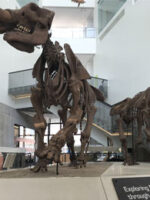 University of Michigan Museum of Natural History; Courtesy of Family Vacation Critic