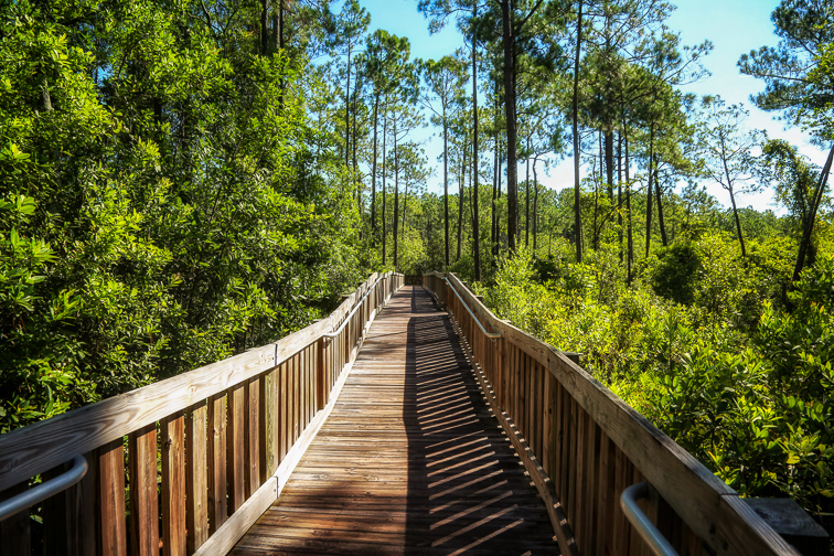 Scenic Nature Trail Flower Tibet-Butler Preserve Orlando, Florida ; Courtesy of Timothy Holle /Shutterstock