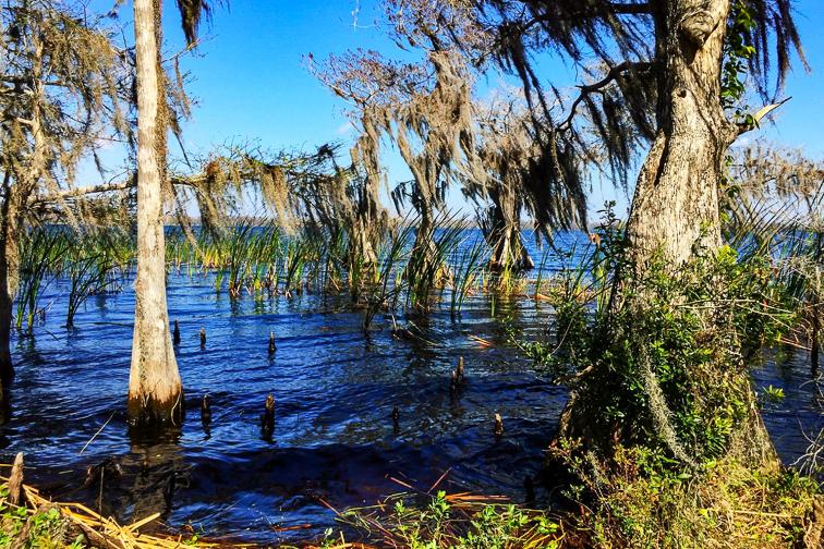 Disney Wilderness Preserve ; Courtesy of TripAdvisor traveler/ GassonG