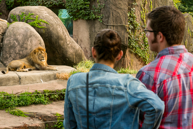 Visit the Free-Admission Lincoln Park Zoo;Courtesy of Choose Chicago
