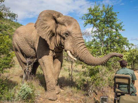 Kruger National Park, South Africa; Courtesy of TUX85/Shutterstock