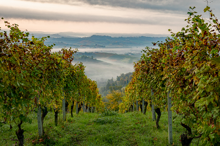 The Langhe, Piedmont Region; Courtesy of The Langhe_ Vineyards