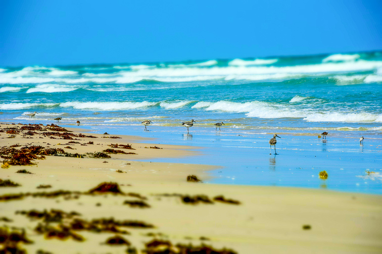 Malaquite Beach, North Padre Island; Courtesy of Johnny C Brown/Shutterstock