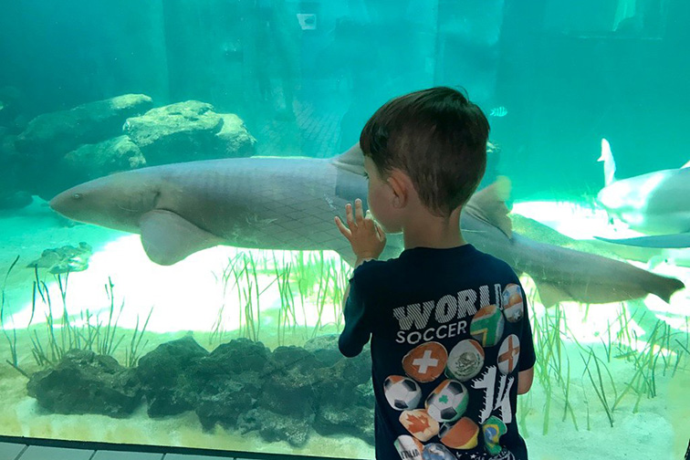 Sarasota, Florida Aquarium; Courtesy of TripAdvisor Traveler/Kelleygirl2