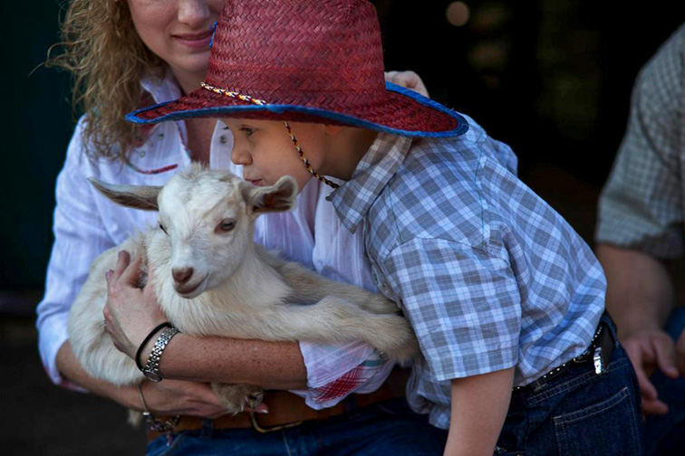 petting zoo at the Westgate River Ranch Resort & Rodeo; Courtesy of the Westgate River Ranch Resort & Rodeo