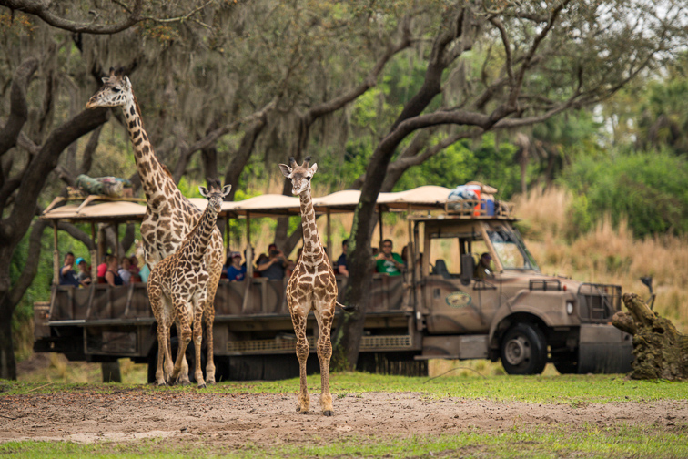 Kilimanjaro Safaris ; Courtesy Disney