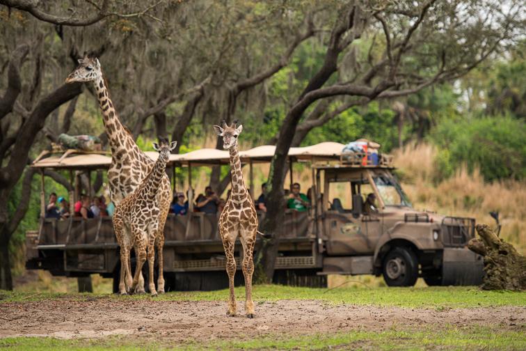 Kilimanjaro Safaris; Courtesy Disney