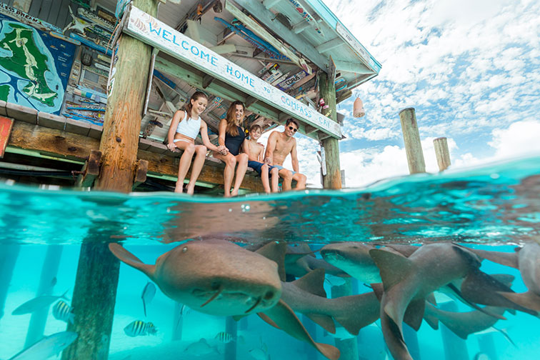 Family With Nurse Sharks at Compass Cay in the Exuma Islands