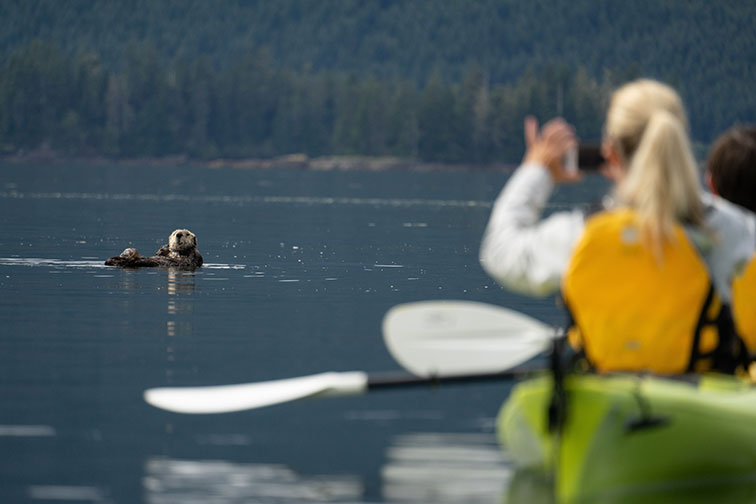 Sea Otter Spotted While Kayaking With UnCruise Adventures