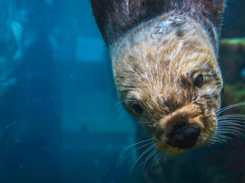 Monterey Bay Aquarium; Courtesy of Knmata/Shutterstock