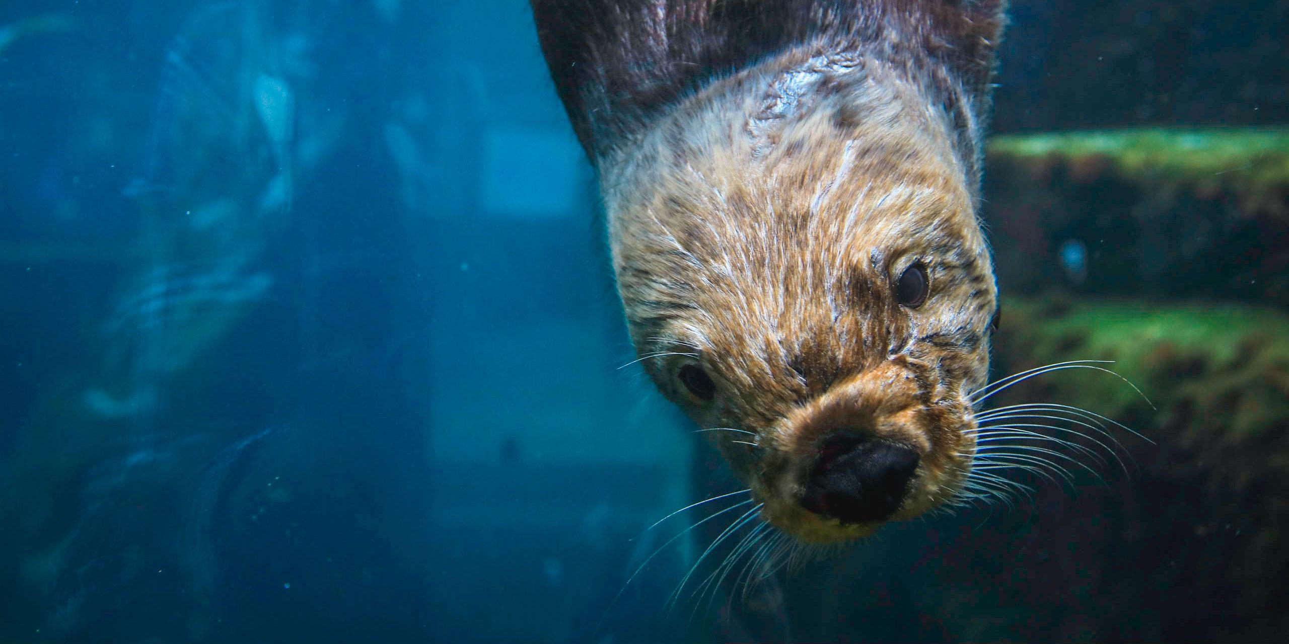 Monterey Bay Aquarium; Courtesy of Knmata/Shutterstock