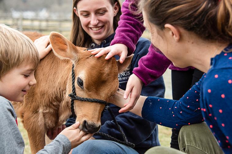 Billings Farm & Museum calf with kids; Courtesy Billings Farm & Museum