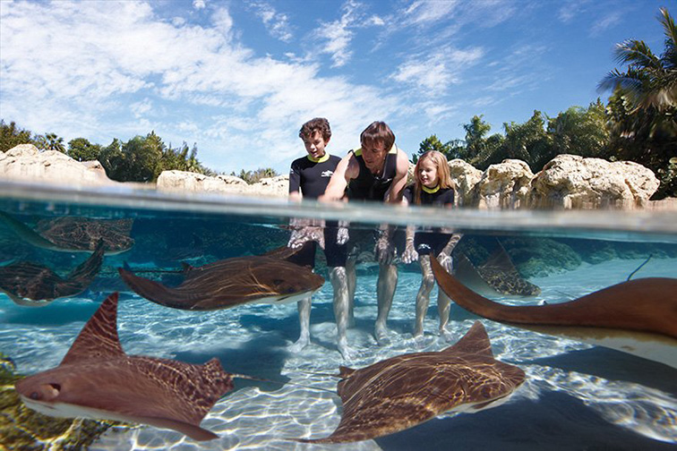 Discovery Cove; Courtesy Discovery Cove