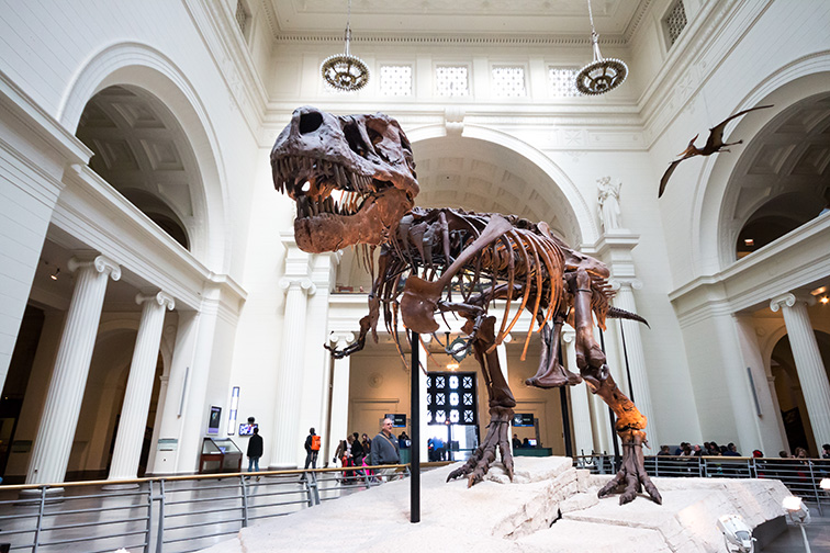 The Field Museum; Courtesy Busara/Shutterstock