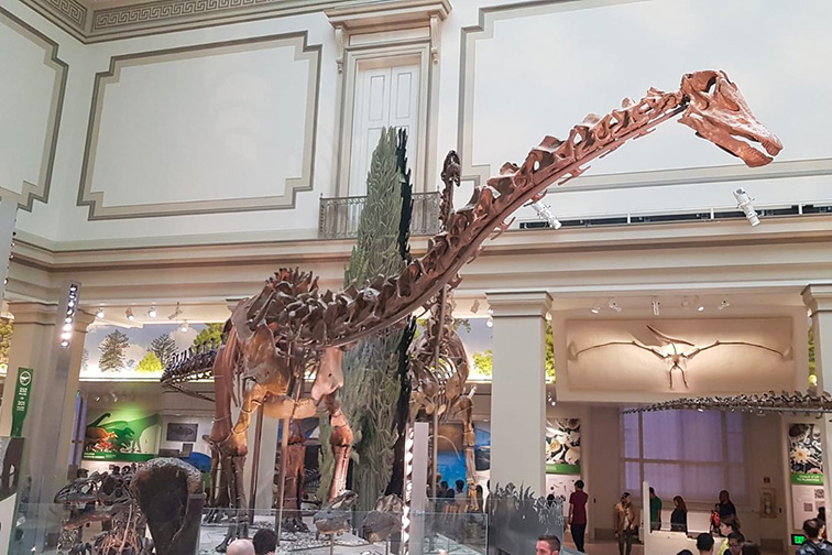 Smithsonian Museum of Natural History – Washington, D.C.; Courtesy Tripadvisor Traveler/Babi