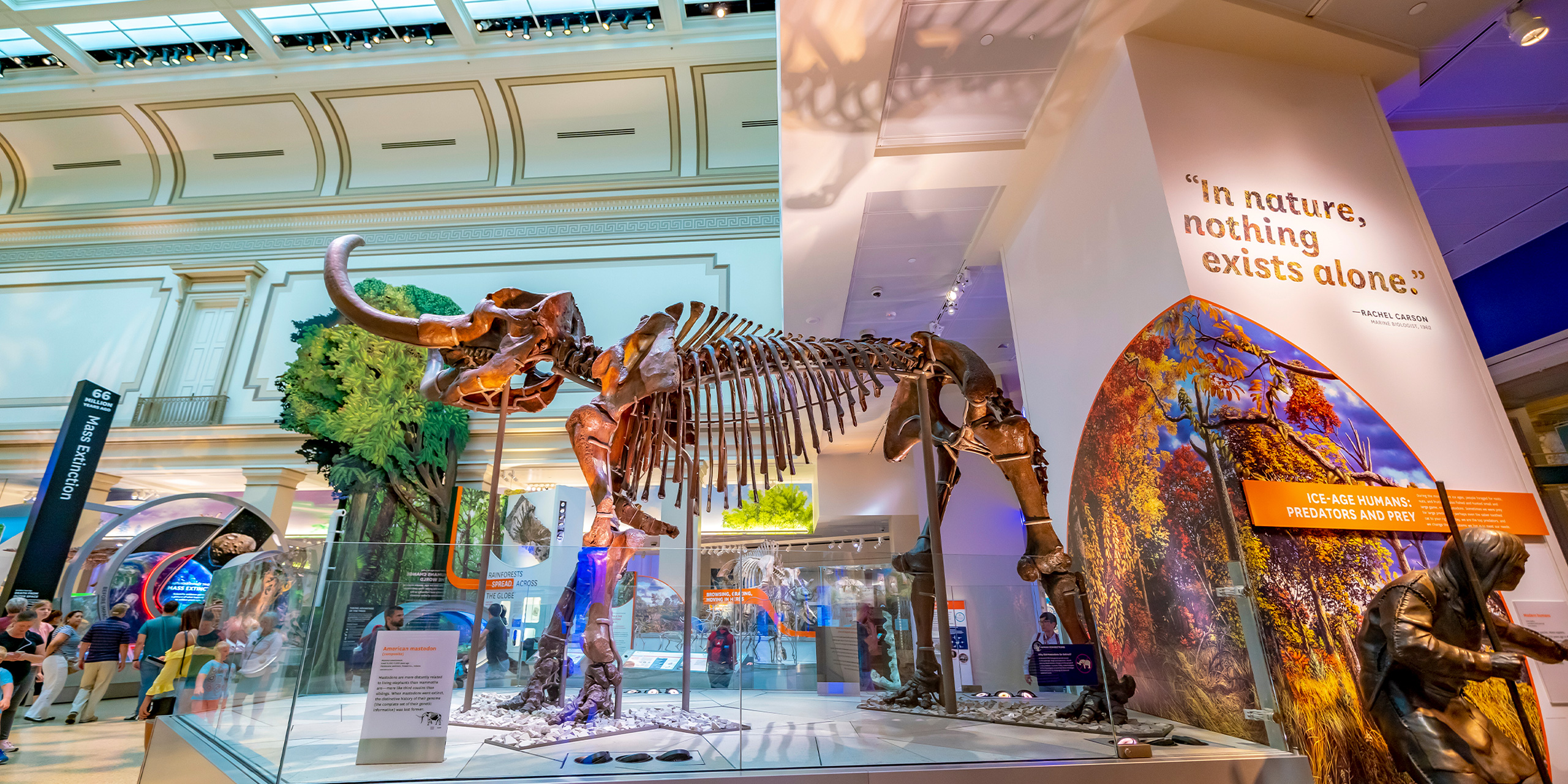 The National Museum of Natural History is a natural history museum administered by the Smithsonian Institution, located on the National Mall.