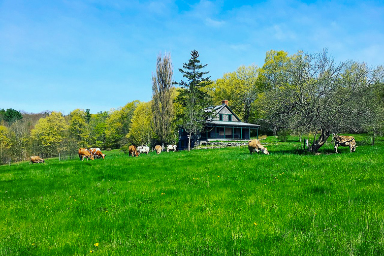 Toddy Pond Farm – Monroe, Maine; Courtesy Toddy Pond Farm
