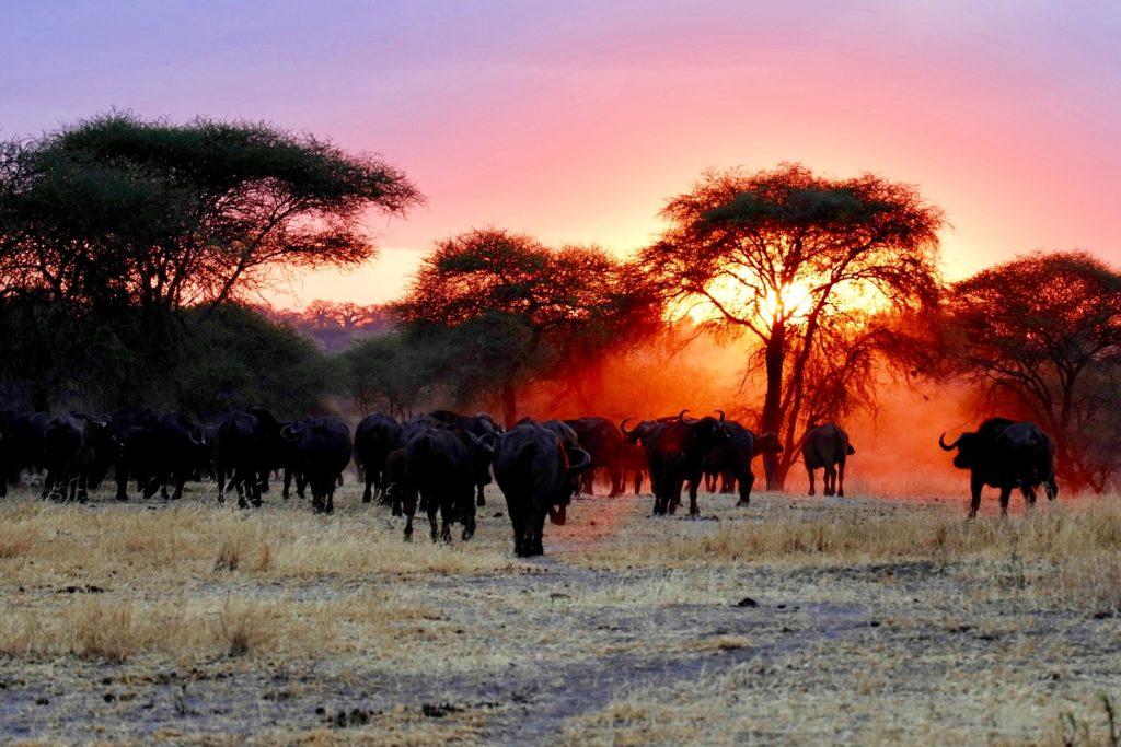 Jumbari Family Safaris 9 Day Wildebeest Calving Season Safari