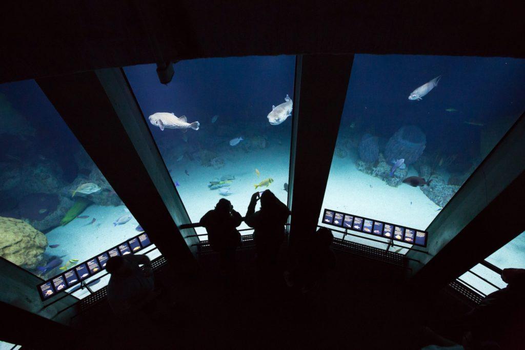 Exhibit at the National Aquarium