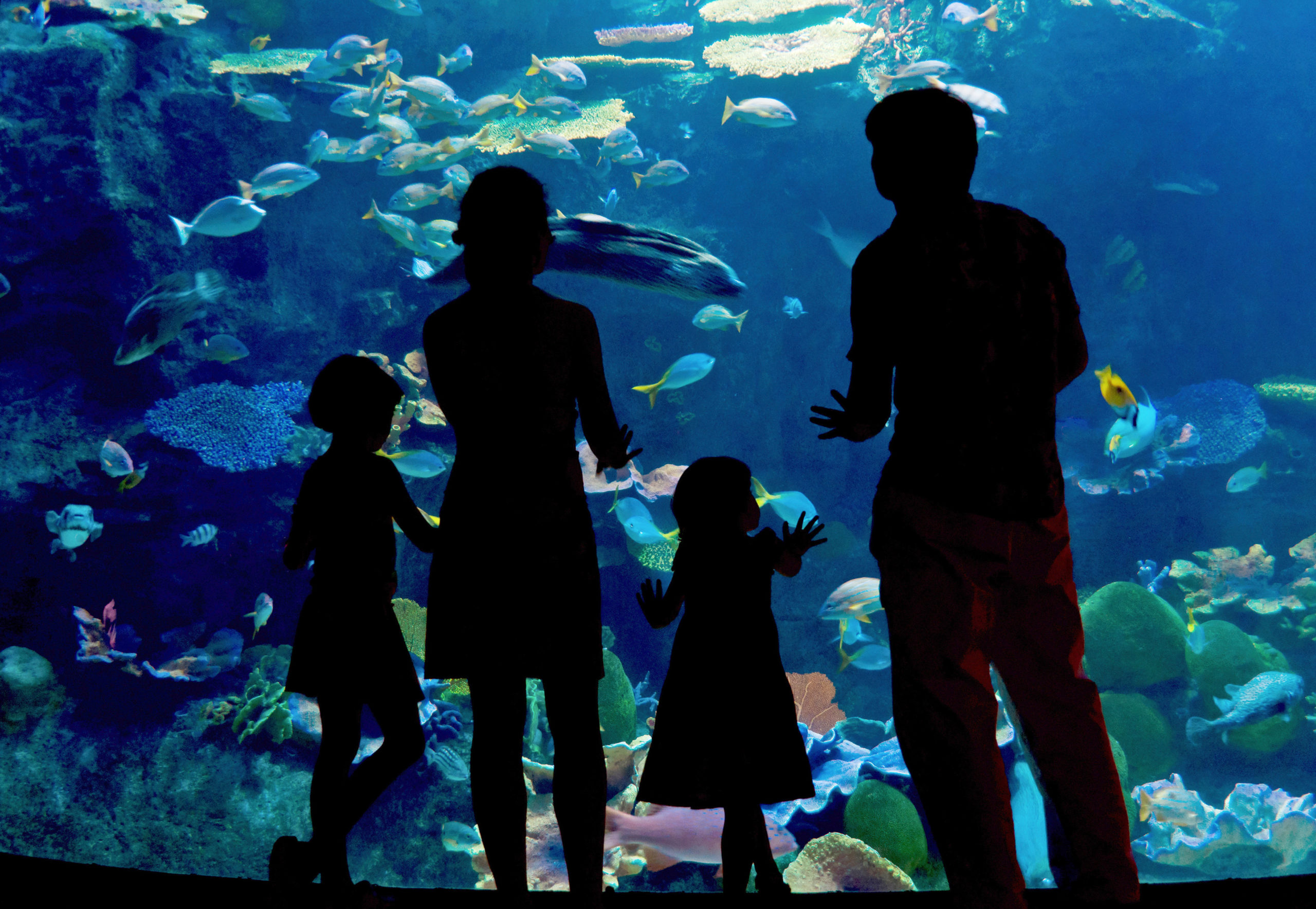 Silhouettes of a family at the aquarium