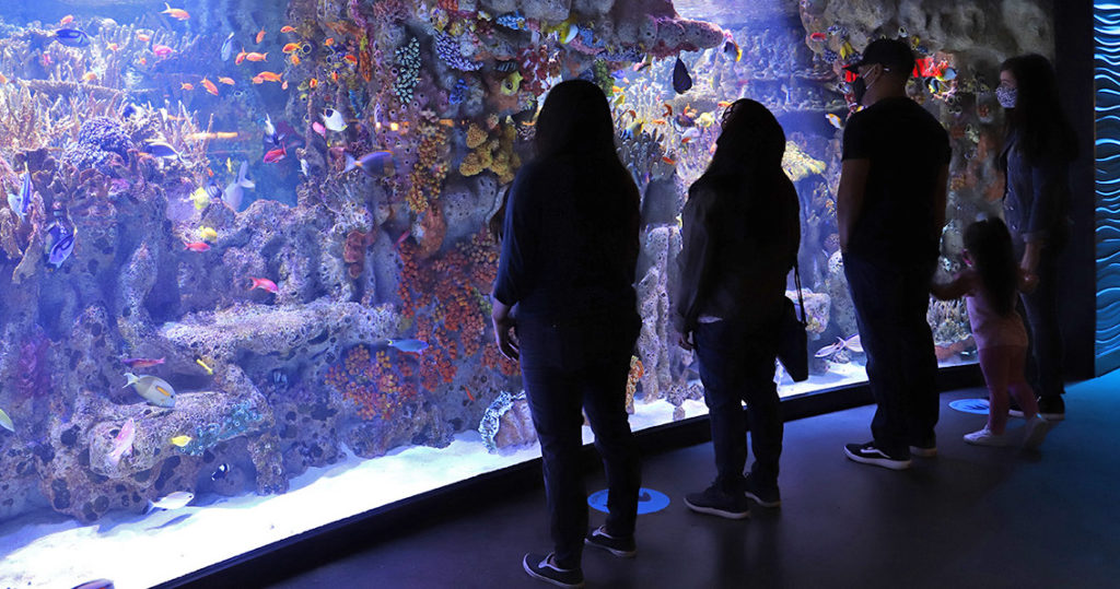 Silhouette of family looking at fish tank at the New England Aquarium