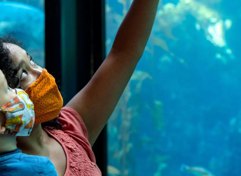 Children pointing at fish tank