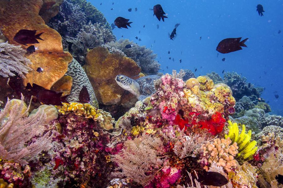 Tank of tropical fish